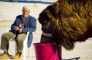 Camel Istanbul